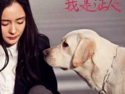 導盲犬圖片 導盲犬是什么狗