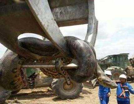 四川55米大蟒蛇是真实的吗 四川55米长大蟒蛇是真的吗