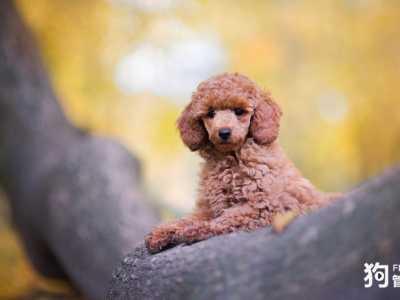 家養什么狗最好圖片 什么狗最干凈最好養